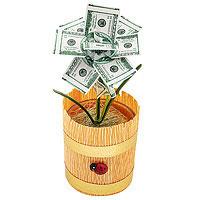 Денежное дерево малый доллар
